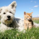 Are You Ready to Be a Pet Parent?