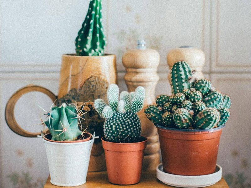Millennial Magazine- Houseplants