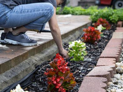 everything-you-need-to-know-to-successfully-grow-plants-in-your-garden